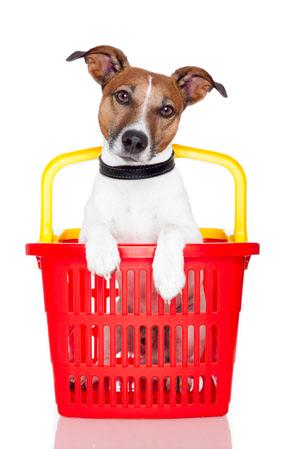 Dog Training Stevenage